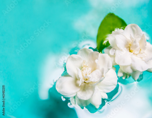 Jasmine flower on water