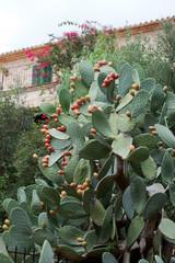 Beautiful Cactus in the Garden