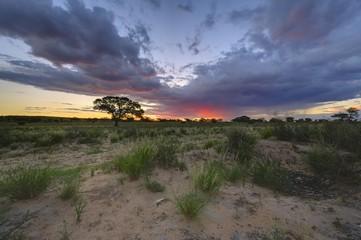 SUNSET, Kgalagadi Transfrontier Park,