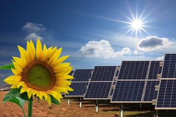 Solarkollektoren, Sonnenschein und Sonnenblume