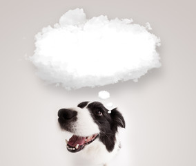 Cute dog with empty cloud bubble