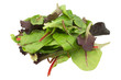 Mixed salad baby red leaf, baby spinach & red chard isolated on