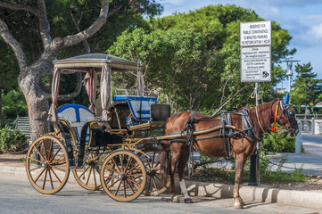 Horse-drawn Buggy in Mdina, Malta