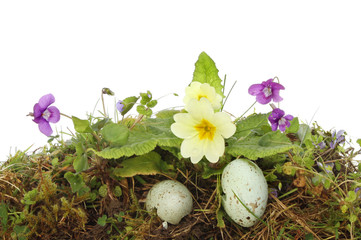 Spring flowers and eggs