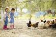 Leinwanddruck Bild - Two little girl feeding chickens