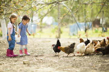 Two little girl feeding chickens