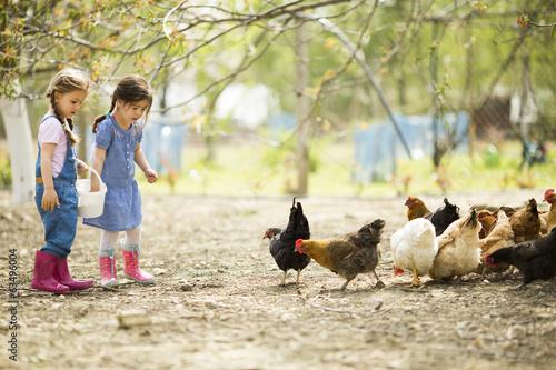 Leinwanddruck Bild Two little girl feeding chickens