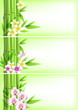 Banners with green bamboo and flowers
