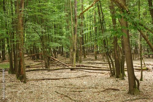 bosco di mesola sito naturalistico ferrara emilia romagna
