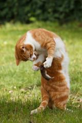 Katze fängt Beute