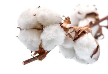Cotton buds branch. Small Depth of Field (DOF)