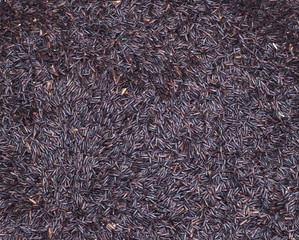 Black Rice The Organic Food
