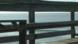 blackbird running on fishing pier railings