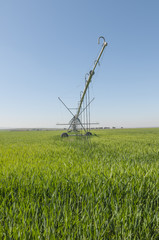 irrigation series 03