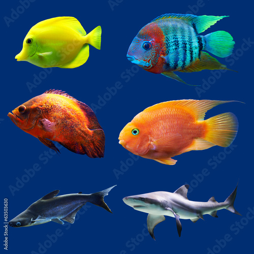 Set of tropical fish. Isolated on blue. Hight res.