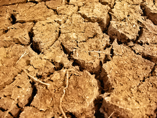 Dried, cracked earth