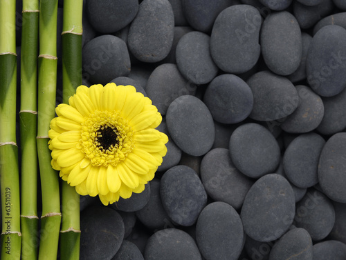 Yellow gerbera and thin bamboo grove on zen pebbles