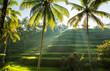 Tegalalang, Bali - 63511291