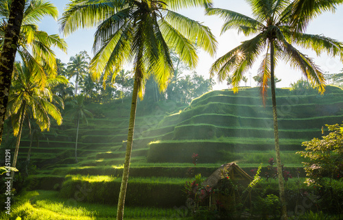 Keuken foto achterwand Indonesië Tegalalang, Bali