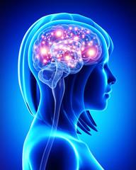 Anatomy of female active brain