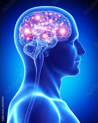 Fototapeta Anatomy of male active brain