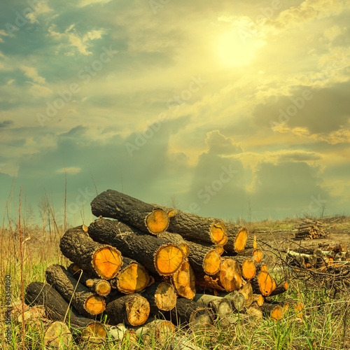 heap of pine barrels