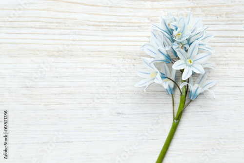 beautiful spring flowers on wooden surface