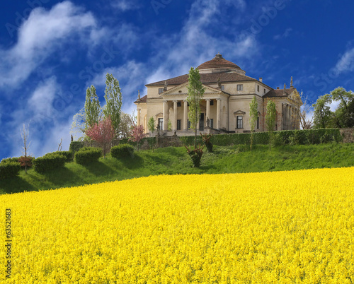 Villa La Rotonda with yellow flower field of rapeseed in Vicenza