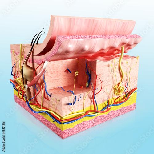 human skin layer - 63521816