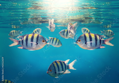koralowa-ryba