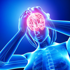 Anatomy of female brain pain in blue