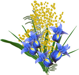 bunch of iris and mimosa flowers isolated on white