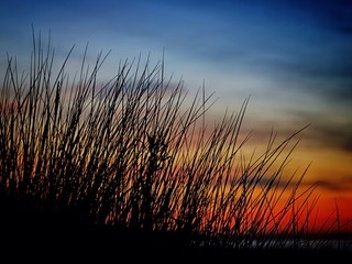 Instant - Dünengras im Sonnenuntergang