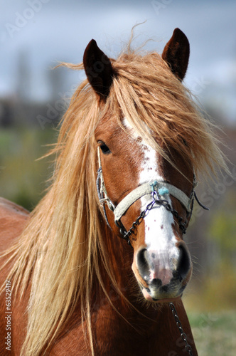 Portrait of a beautiful horse