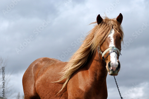 Brown horse with blonde mane