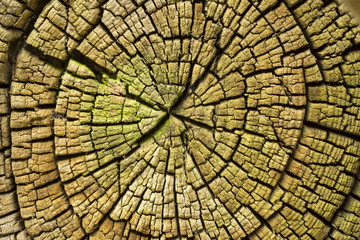 Radial cracks of sawed wood texture