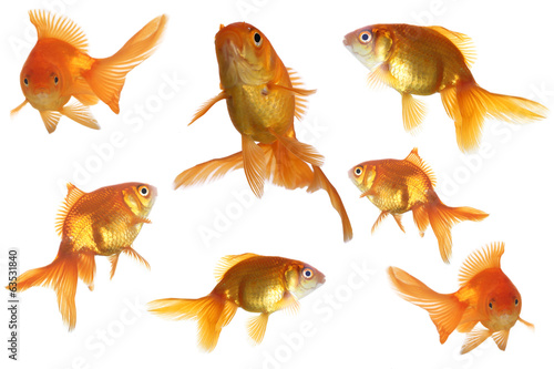 Goldfish  isolated on white
