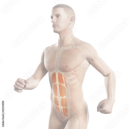 anatomy illustration showing the abs of a jogger