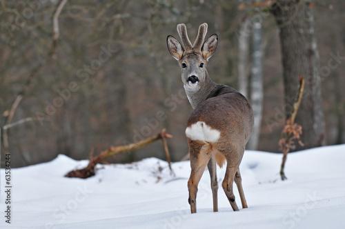 Aluminium Ree Roe deer