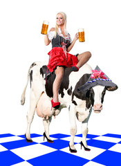 crazy tiroler or oktoberfest woman sitting on a cow with a beer