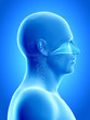 Постер, плакат: anatomy illustration showing the nasal cavity