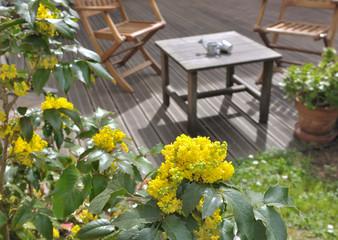 Floraison d'un mahonia sur terrasse