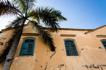 Old crumbling building with palm tree
