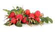 Obrazy na płótnie, fototapety, zdjęcia, fotoobrazy drukowane : Rose Hip Fruit
