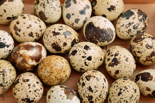 quail eggs in tray horizontal