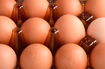 brown eggs in tray horizontal