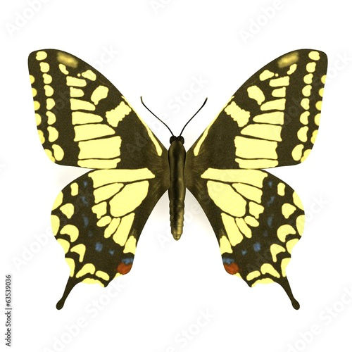 realistic 3d render of butterfly