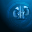 Kidneys abstract blue background
