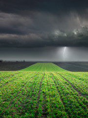 Young wheat crop in field against large storm