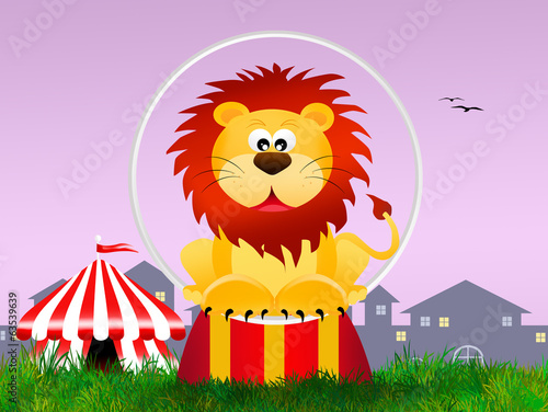 Lion in the circo